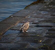 Sad seagull by danivazquez