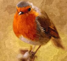 Artwork - Robin Red Breast by ncp-photography