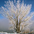 Topaz Winter by Terry Shumaker