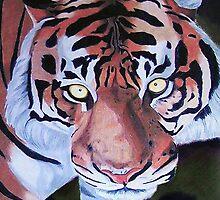 Tiger by Penny Edwardes