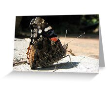 close up of butterfly Greeting Card