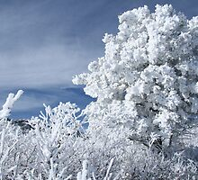 Winter in Colorado by JamesMichael