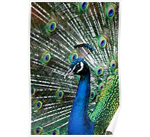 Pride of the Peacock Poster