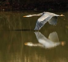 Wing to Wing by Kenneth Haley