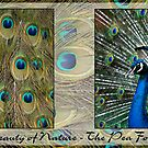 Beauty of Nature - The Pea Fowl by Gayle Shaw