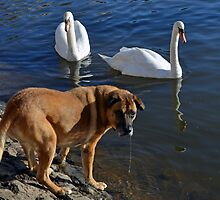 Teddy and The Swans ........... by lynn carter