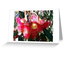 Red Flowering Gum Flowers  Greeting Card