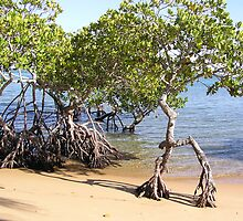 Mangroves Town of 1770 by Virginia McGowan