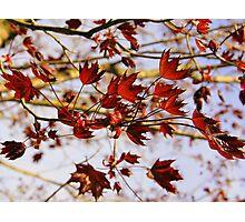 New Life - King Crimson Photographic Print