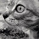 Bobinette the cat... by Louise LeGresley