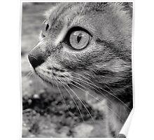 Bobinette the cat... Poster