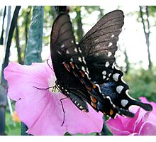 Tiger Swallowtail 2 Photographic Print