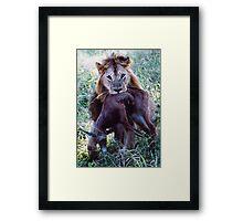 Jungle Life ... Framed Print