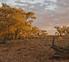 Outback Oz by Craig Hender