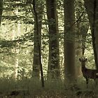 Deer in Micheldever woods by LightPhonics