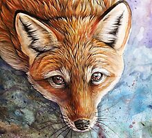 The Look by Rainbow Foxes