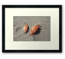 Baby Crabs Framed Print