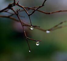 Dew Drops by Jonicool