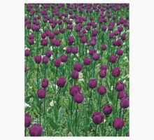 Purple Mass of Tulips  A Kids Clothes
