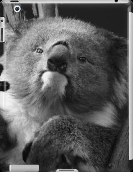 Koala 1 B&W by photonista