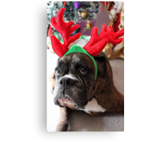 Reindeer This Year?...... Anything For That Cookie! Canvas Print