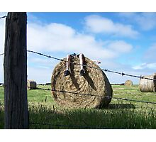 haybale daydreams Photographic Print