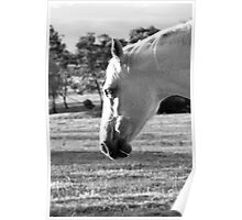 Race Horse at Heart Poster