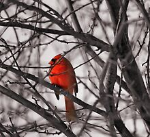 Just Because I'm Bright Red Doesn't mean you need to stop and shoot me... by Keala