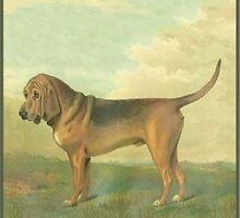 Bloodhound by spotz