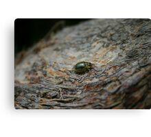 Translucent Beetle Canvas Print
