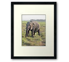 Peeing elephant Framed Print