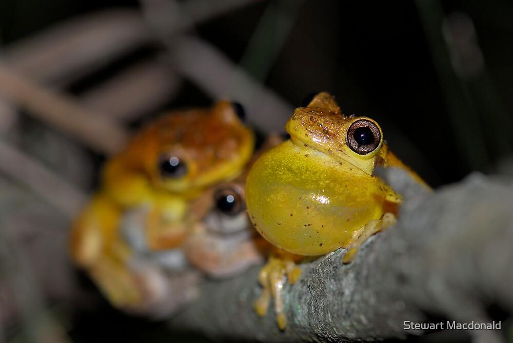 Tyler's tree frogs by Stewart Macdonald