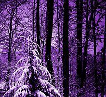 Lavender Winter by jlynn