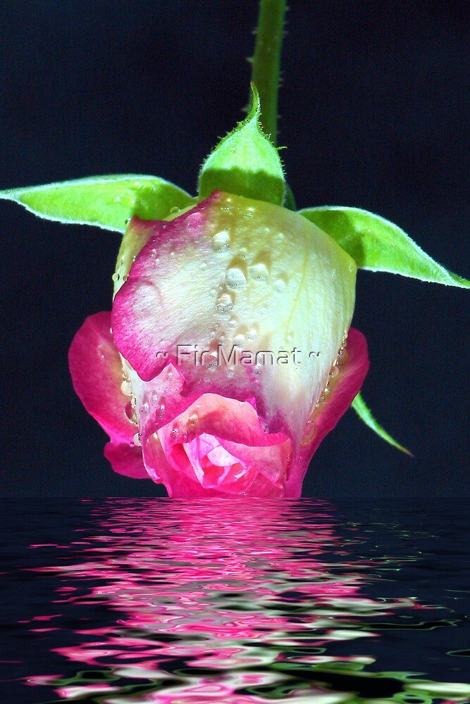 Rose Dip by ~ Fir Mamat ~
