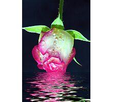 Rose Dip Photographic Print