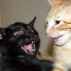 Kitty Fights by Allison Lane