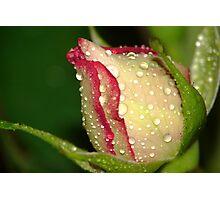 Rosebud After Rain Photographic Print