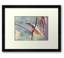 Brush Cuckoo  Framed Print