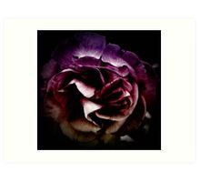 puple rose Art Print