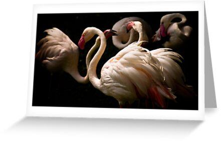 Flamingos  by Dan Davies