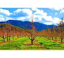 Natural Lines - Buckland Valley, Victoria Australia Photographic Print