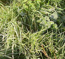 sharp frost by brucemlong