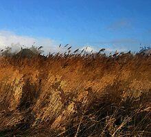 Landscape, painteffect by douwe