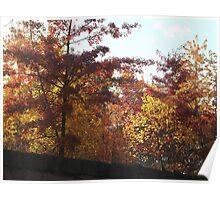 Sixth Street Embankment, Autumn Colors, Abandoned Pennsylvania Railroad Embankment, Jersey City, New Jersey  Poster