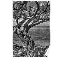 Gnarled Old Tree Poster