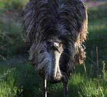 Emu by RochelleJean