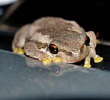 Frog by Cheryl Hall
