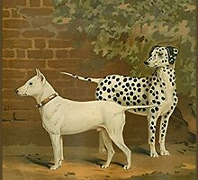 Dalmatian and English Terrier by spotz