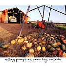 Rotting Pumpkins, Anna Bay, Australia by Paul Foley