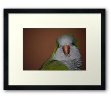 silly buddy  Framed Print